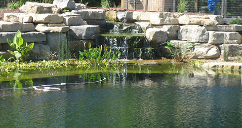 Brookside Contracting | Natural Swimming Pools